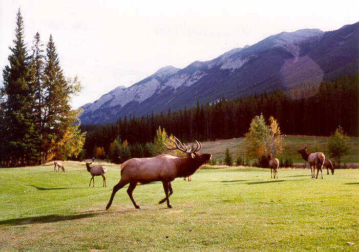 Hire RV for Banff National Park