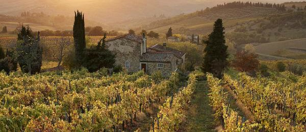 Chianti wine farming